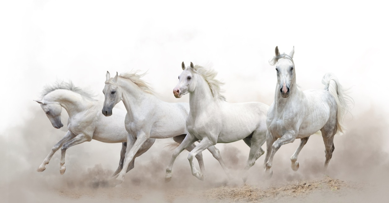 Run With Horses